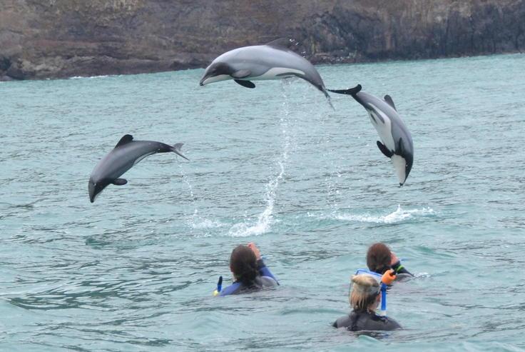 Bersenang-senang Dengan Lumba-Lumba di New Zealand