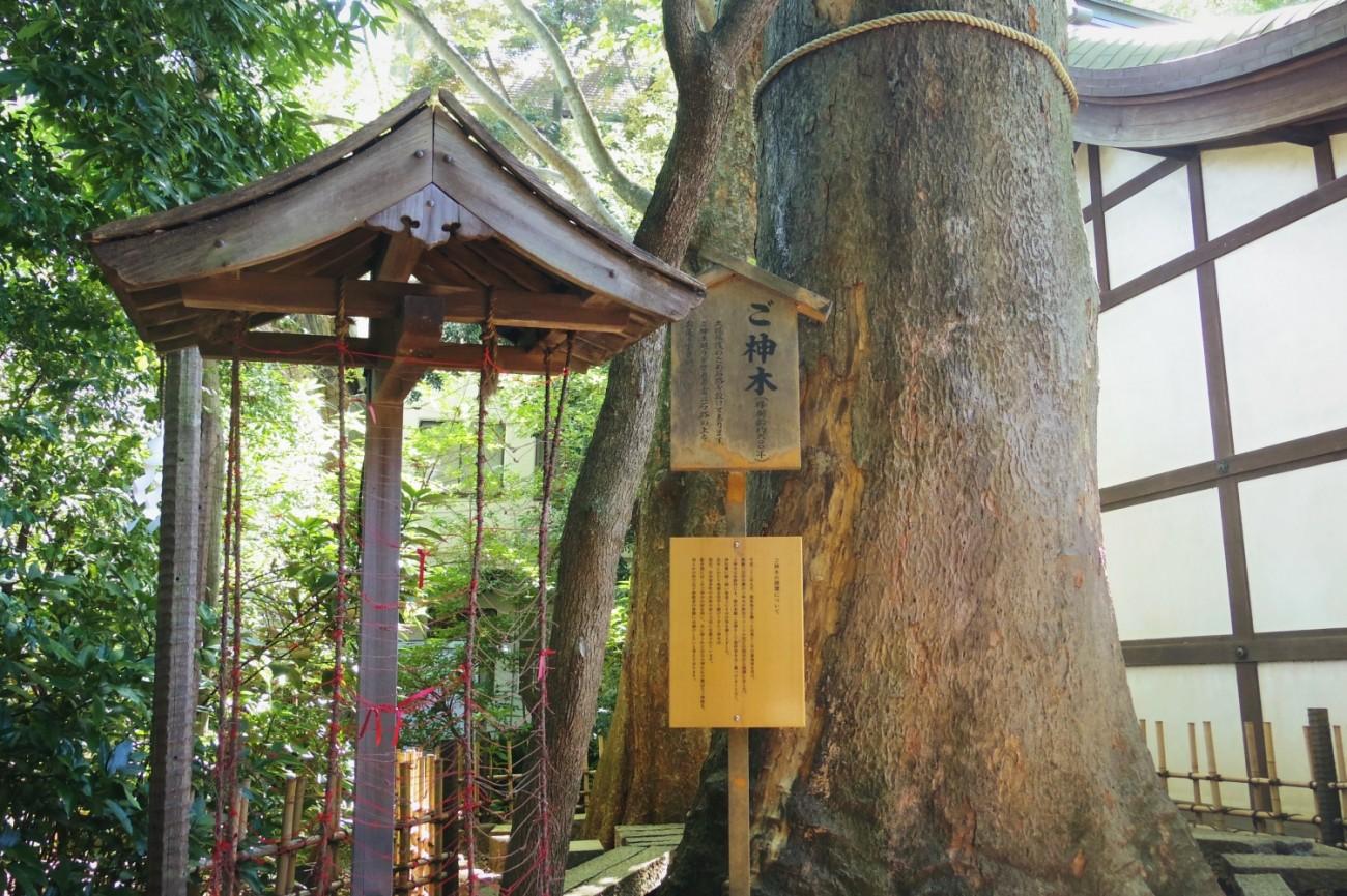 Pohon Suci Kawagoe Hikawa