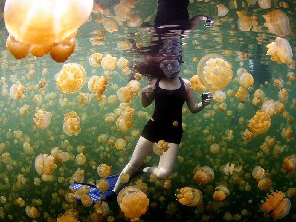 Berenang di Danau Ubur-ubur