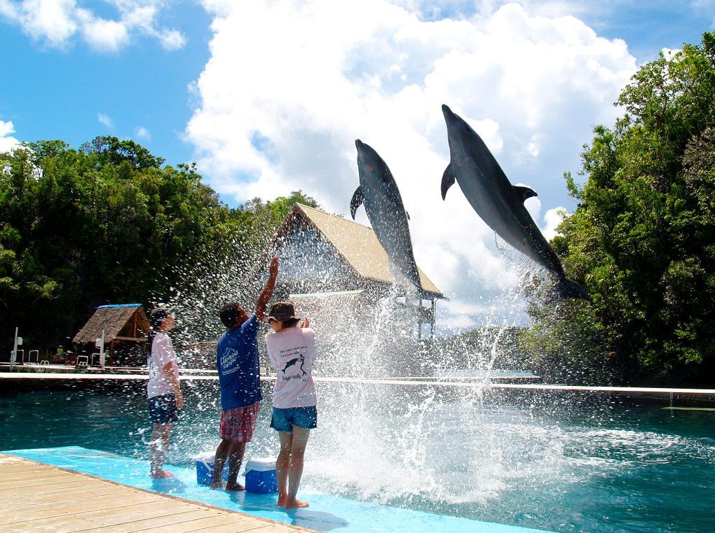 Bermain dengan Lumba-Lumba di Dolphins Pacific