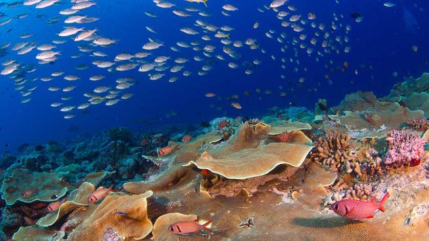 Snorkeling di Danau-Laut Palau