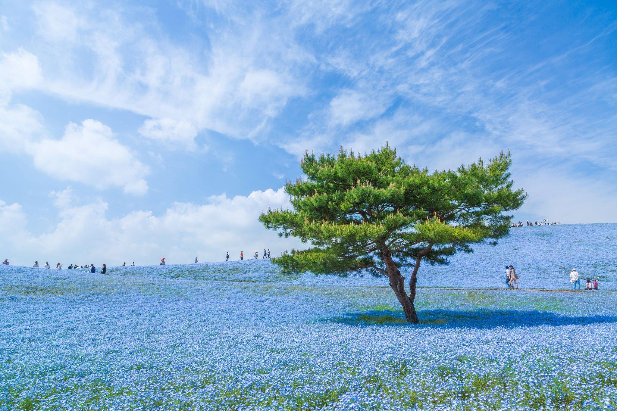 Wisata Hitachi Seaside Park Jepang