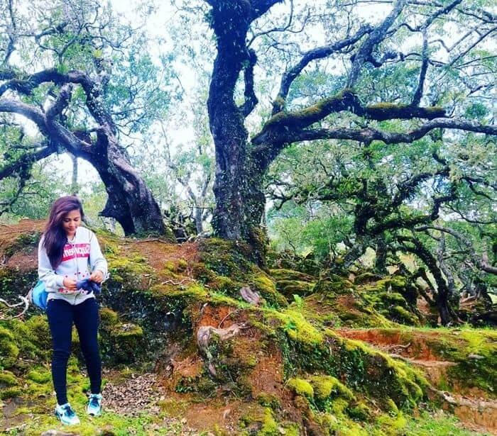 Hutan Bonsai Gunung Mutis