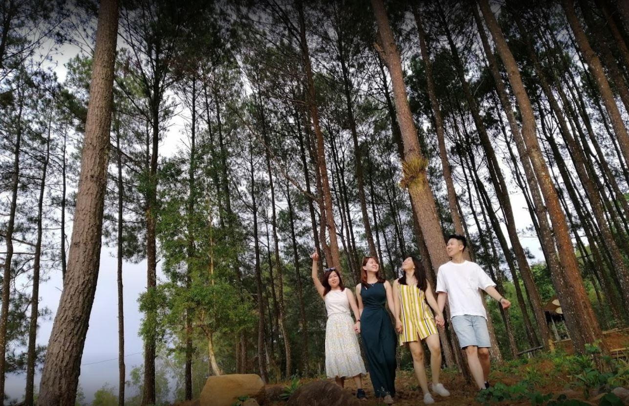 Hutan Pinus Menuju Pintu Langit Dahromo