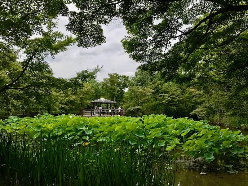 Kebun Raya Takao
