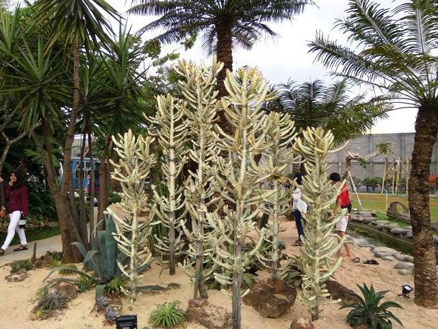 Tanaman Kaktus di Peta Park Bandung